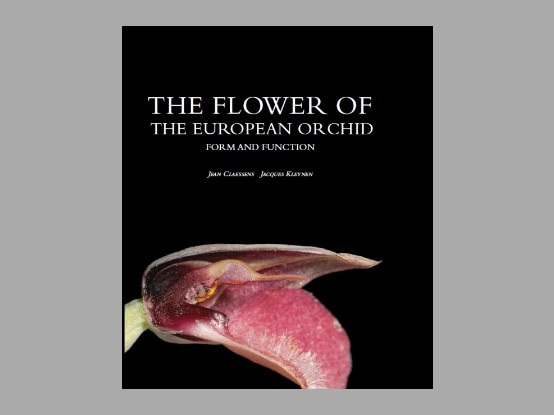 The Flower of the European Orchid – Form and function